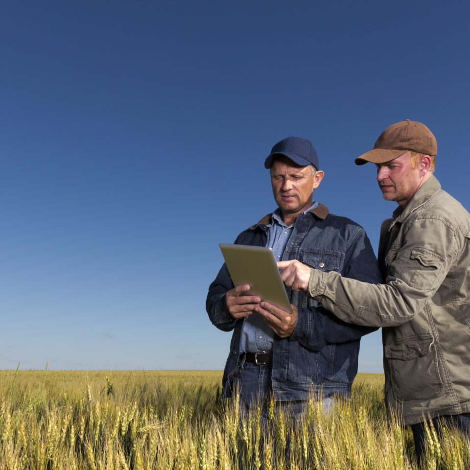 An image from the farming industry of two farmers using a tablet PC.