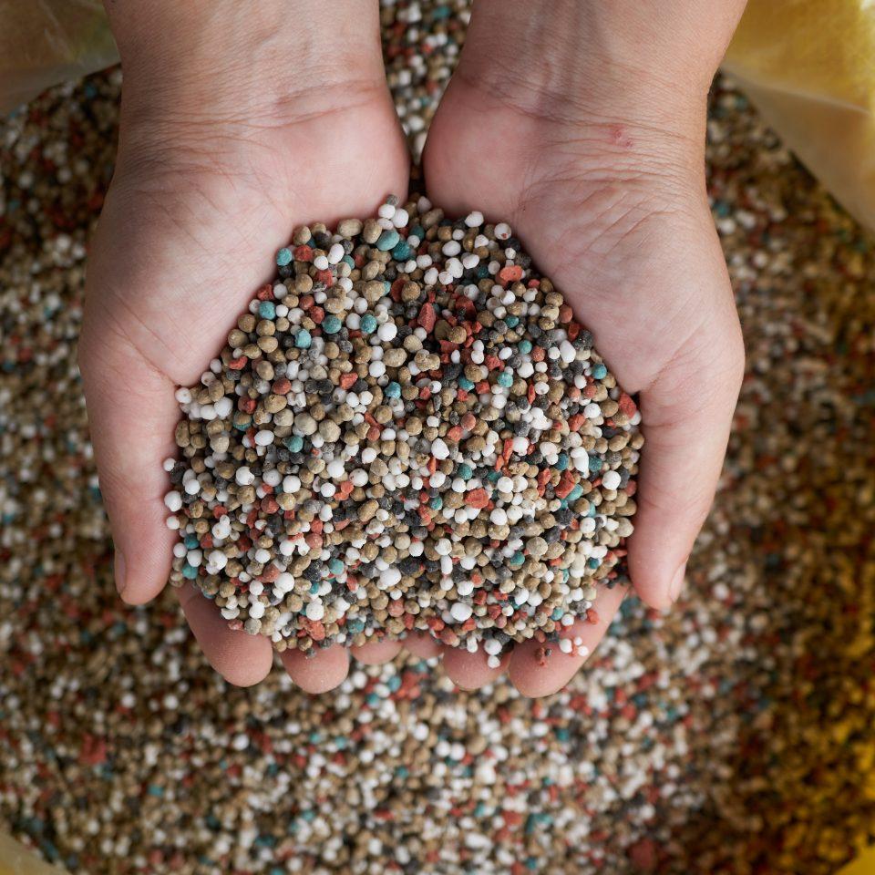 npk fertilizer in farmer hand