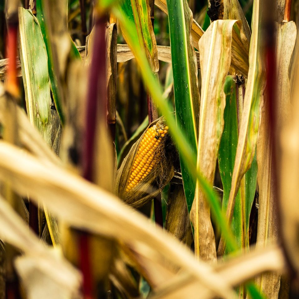 Crop Removal Rates – Replacing What Your Crop Takes Out