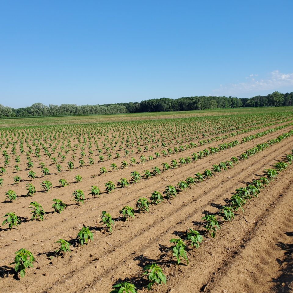 Top 10 Reasons to Put Together a Crop Plan