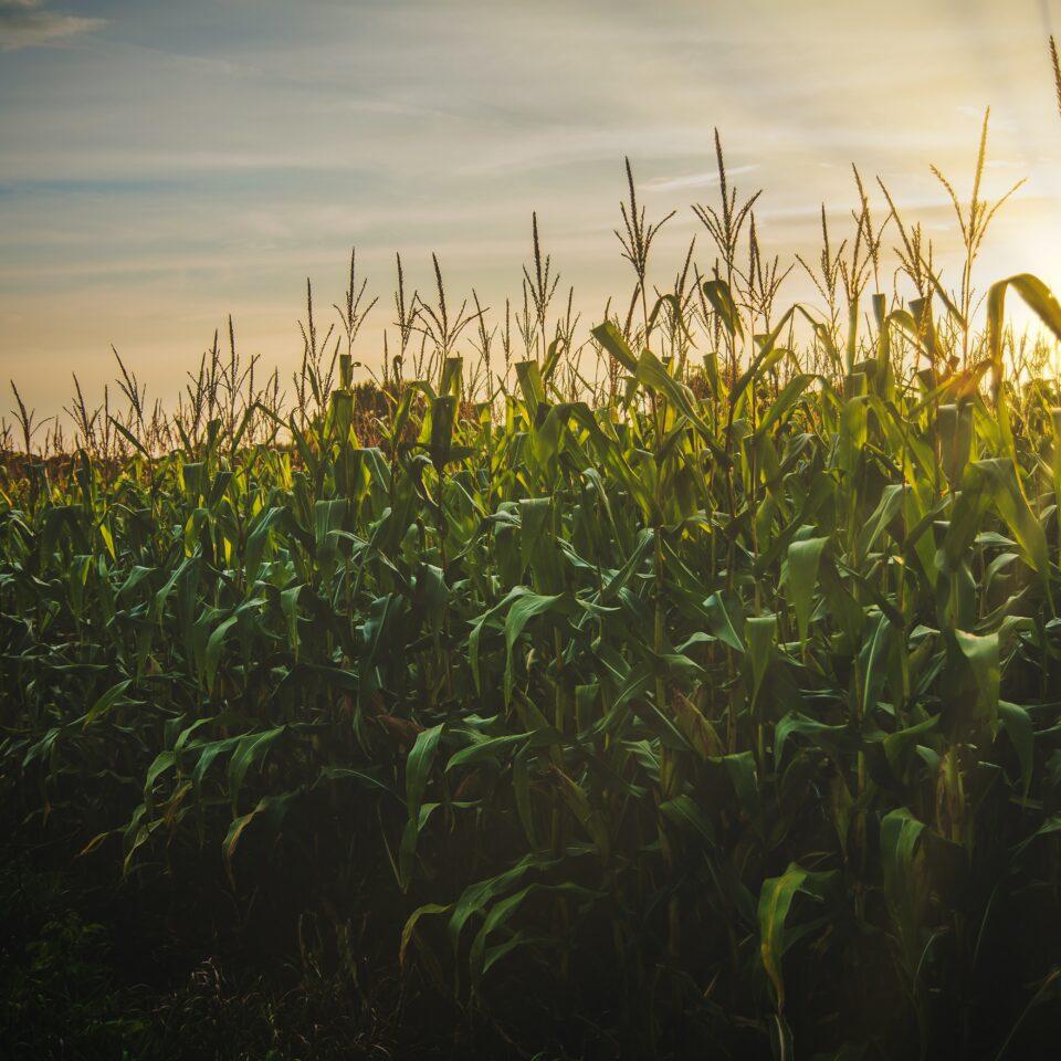 Tips for Harvest