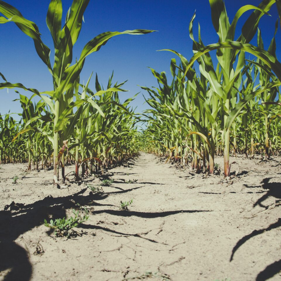 New Crop Protection Offerings 2021